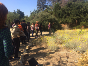 A tour of the Rancho Santa Ana Botanic Garden with horticulturist Ashlee Armstrong. (Photo by T. Heath)